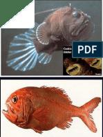 251 2010 14 Deep Sea Ecosystems I
