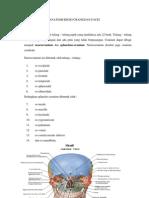 Anatomi Regio Cranii Dan Facei