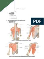Anatomi Otot fik