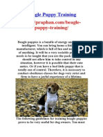 Beagle Puppy Training - http://praphan.com/beagle-puppy-training/