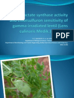 Acetolactate Synthase Activity and Chlorsulfuron Sensitivity of Gamma-irradiated