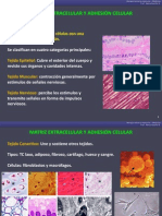 11a. Matriz Extracelular
