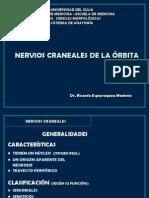 Orbitanervios[1]