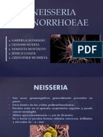 Neisseria Gonorrhoeae Presentacion Termi