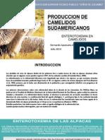 Enterotoxemia de Alpacas