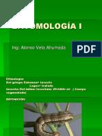 Entomología I- Clases_morfología