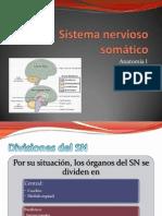 Sistema nervioso somático 1 de 4