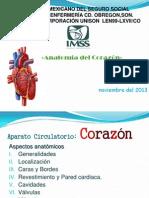 Anatomia Del Corazon