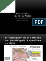 parcranealiolfatorio-130303233642-phpapp01