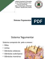 Universidade Estadual Do Maranhãoslide Histologia