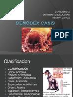 Demódex Canis