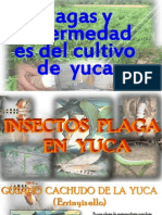 Plagas y Enfermedades de La Yuca