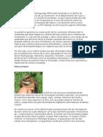 La Reserva Comunal Machiguenga
