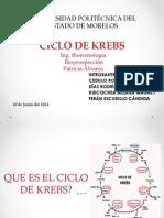 CICLO de KREBS. Bioprospeccion