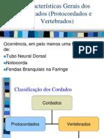 protocordadosVertebrados16082011-1