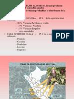 Cata de Aceituna Peru