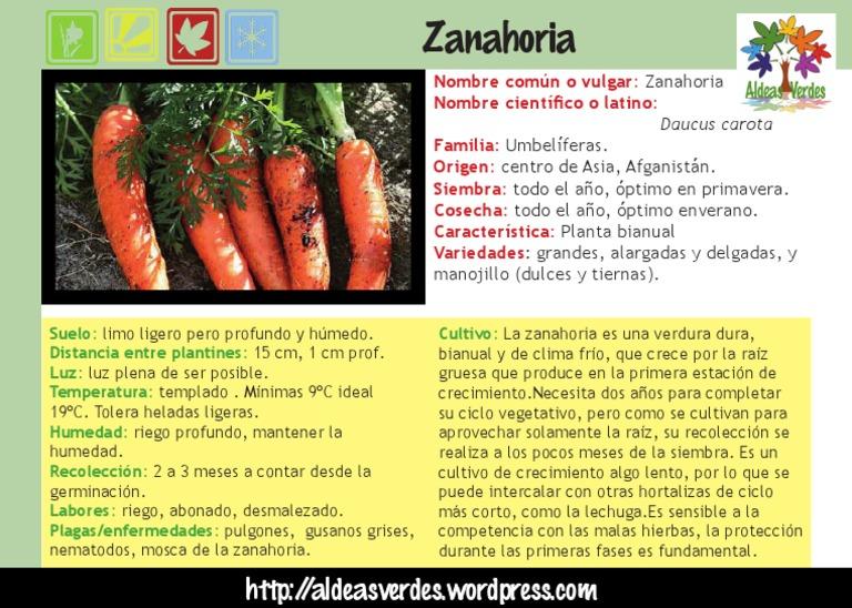 Zanahoria Ppc > plantas medicinales > plantas por nombre científico > plantas por nombre cientifico que dentro de los beneficios de la zanahoria para la piel, se encuentra el de resultar un vegetal. scribd