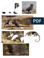 Animales - Extinsion