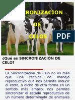Sincronización y poliovulación