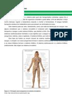 Circulatorio e Respiratorio