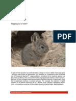 Iucn Red List of Threatened Species Lagomorph Fact Sheet