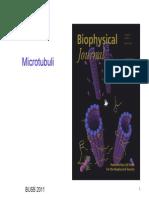 Slide Citoscheletro Microtubuli