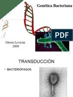 Clase 8 Genética bacteriana 2