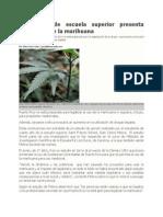 Estudiante de Escuela Superior presenta estudio sobre la marihuana