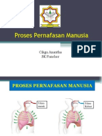 Proses Pernafasan Manusia