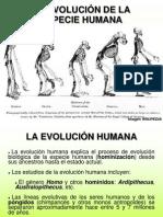 evolucionhumana-110203142747-phpapp02