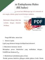 Retikulum Endoplasma Halus (RE Halus).Edited