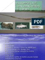 Budidaya Polycultur Rumput Laut, Bandeng Dan Udang Windu Di Tambak