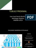 02 Túbulo Proximal