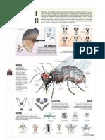 Anatomía de los insectos