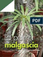 La palma malgascia