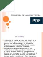 Taxonomia de La Fauna y Flora