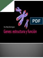 Genes Estructura y Funcion