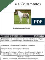 cruzamentoeheterose-110808092621-phpapp01.pdf