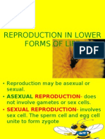 Reproduction in Lower Forms of Life