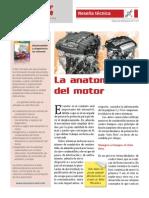 Anatomia Del Motor