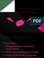 Kelenjar Limfe, Morfologi, & Efek Sistemik