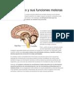 El Cerebelo y Sus Funciones Motoras