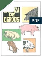 Cerdicultura Crianzade Cerdos