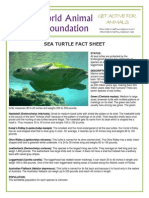 WAF-Sea Turtle Fact Sheet