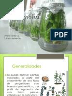 Clonación Vegetal
