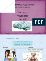 basesneuroanatmicasdellenguajeg1-120405001846-phpapp01