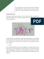 Anatomi rongga thoraks