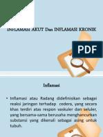 Inflamasi Akut Dan Inflamasi Kronik Ppt