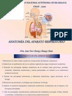 Anatomía Aparato Respiratorio 2012