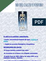(metabolismo del calcio).ppt